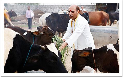Sudhanshu Ji Maharaj | Vishwa Jagriti Mission | Gau Sewa | Cow